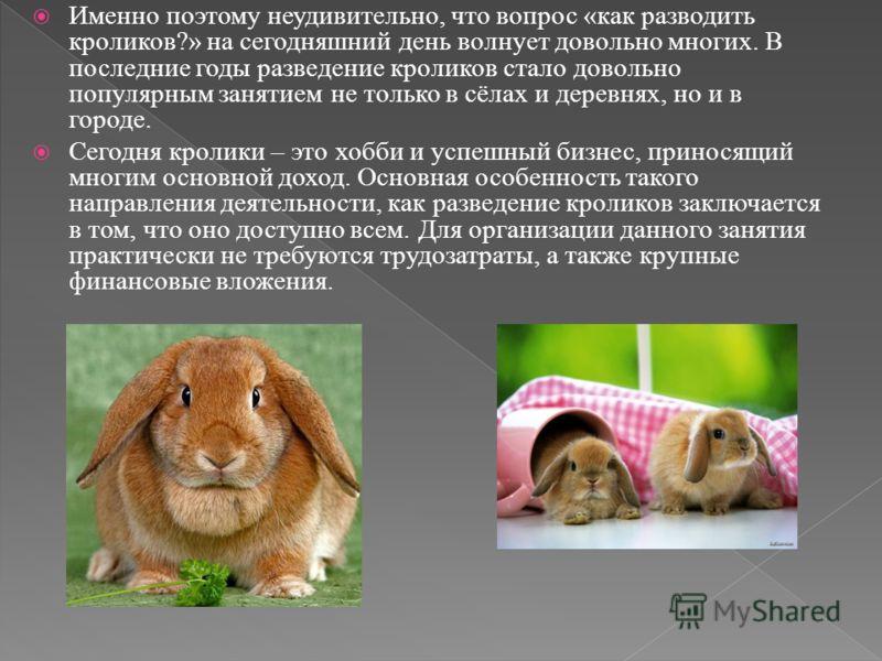 Именно поэтому неудивительно, что вопрос «как разводить кроликов?» на сегодняшний день волнует довольно многих. В последние годы разведение кроликов стало довольно популярным занятием не только в сёлах и деревнях, но и в городе. Сегодня кролики – это
