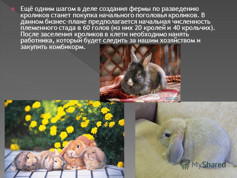 Ещё одним шагом в деле создания фермы по разведению кроликов станет покупка начального поголовья кроликов. В данном бизнес-плане предполагается начальная численность племенного стада в 60 голов (из них 20 кролей и 40 крольчих). После заселения кролик