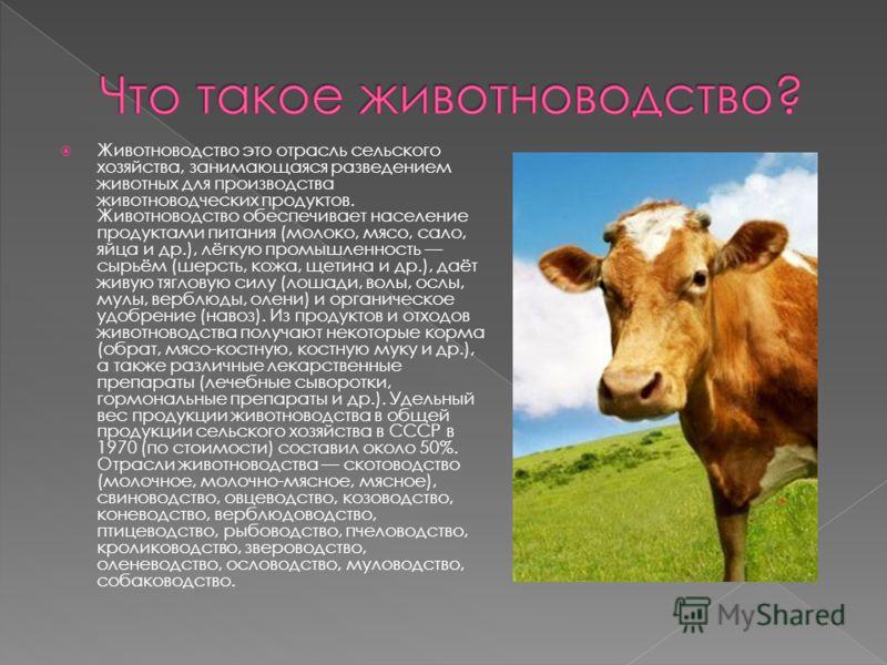 Животноводство это отрасль сельского хозяйства, занимающаяся разведением животных для производства животноводческих продуктов. Животноводство обеспечивает население продуктами питания (молоко, мясо, сало, яйца и др.), лёгкую промышленность сырьём (ше
