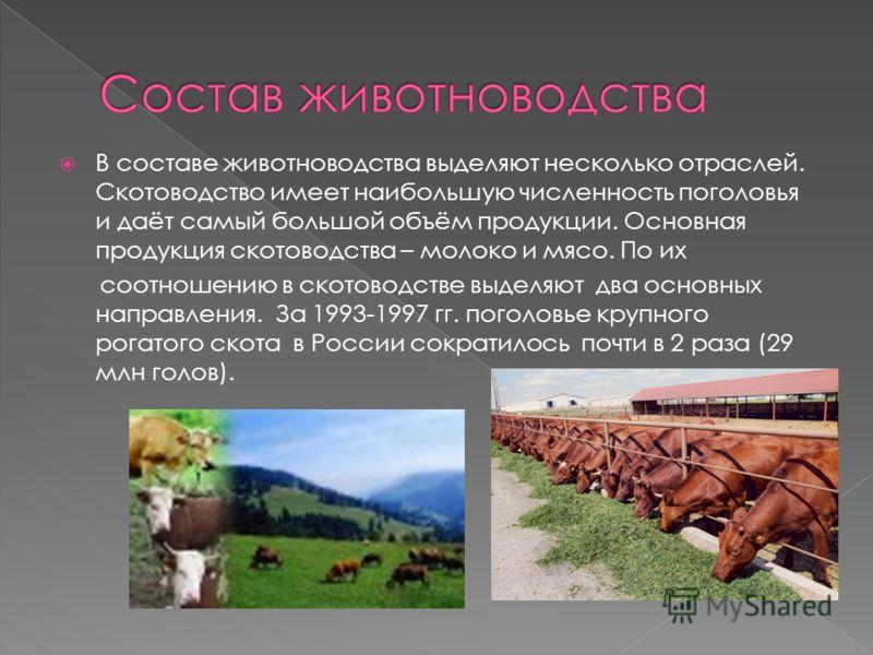 В составе животноводства выделяют несколько отраслей. Скотоводство имеет наибольшую численность поголовья и даёт самый большой объём продукции. Основная продукция скотоводства – молоко и мясо. По их соотношению в скотоводстве выделяют два основных на