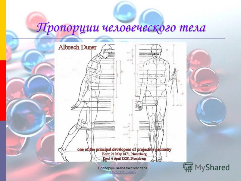 Пропорции человеческого тела Пропорции человеческого тела Альбрехт Дюрер