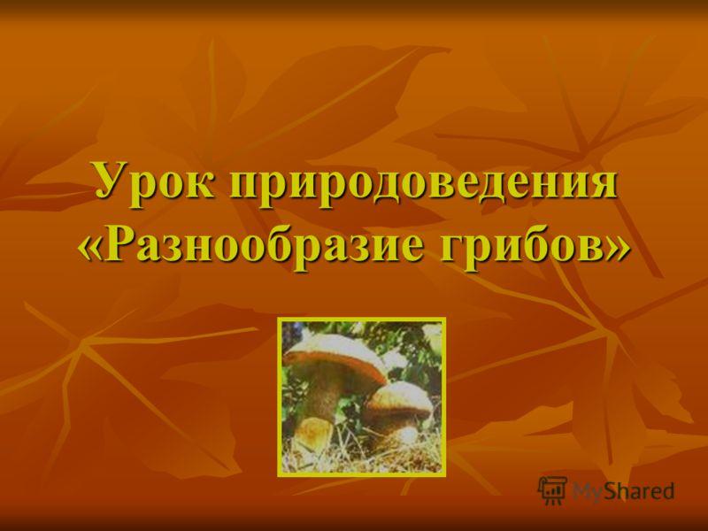 Урок природоведения «Разнообразие грибов»
