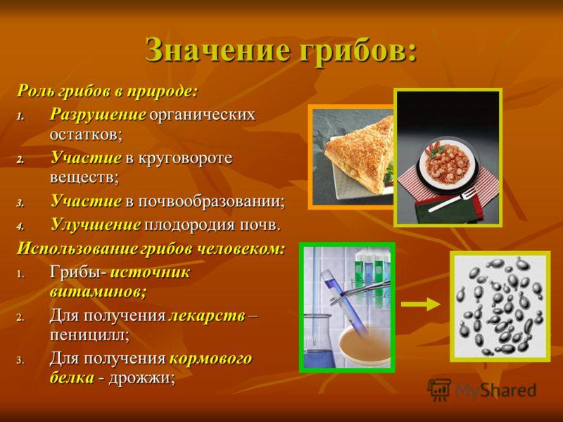 Значение грибов: Роль грибов в природе: 1. Разрушение органических остатков; 2. Участие в круговороте веществ; 3. Участие в почвообразовании; 4. Улучшение плодородия почв. Использование грибов человеком: 1. Грибы- источник витаминов; 2. Для получения
