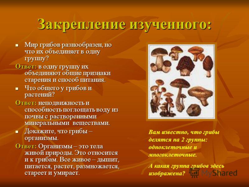 Закрепление изученного: Мир грибов разнообразен, но что их объединяет в одну группу? Мир грибов разнообразен, но что их объединяет в одну группу? Ответ: в одну группу их объединяют общие признаки старения и способ питания. Что общего у грибов и расте