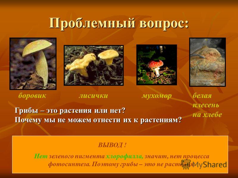 Проблемный вопрос: боровиклисичкимухоморбелая плесень на хлебе ВЫВОД ! Нет зеленого пигмента хлорофилла, значит, нет процесса фотосинтеза. Поэтому грибы – это не растения. Грибы – это растения или нет? Почему мы не можем отнести их к растениям?