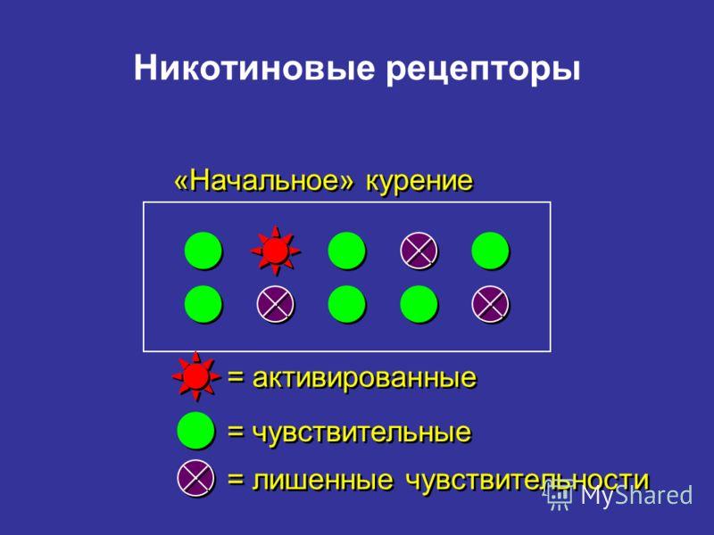 Никотиновые рецепторы «Начальное» курение = = активированные = чувствительные = = лишенные чувствительности