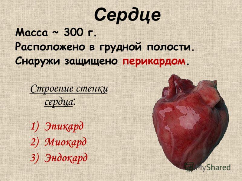 Сердце Строение стенки сердца : 1)Эпикард 2)Миокард 3)Эндокард Масса ~ 300 г. Расположено в грудной полости. Снаружи защищено перикардом.