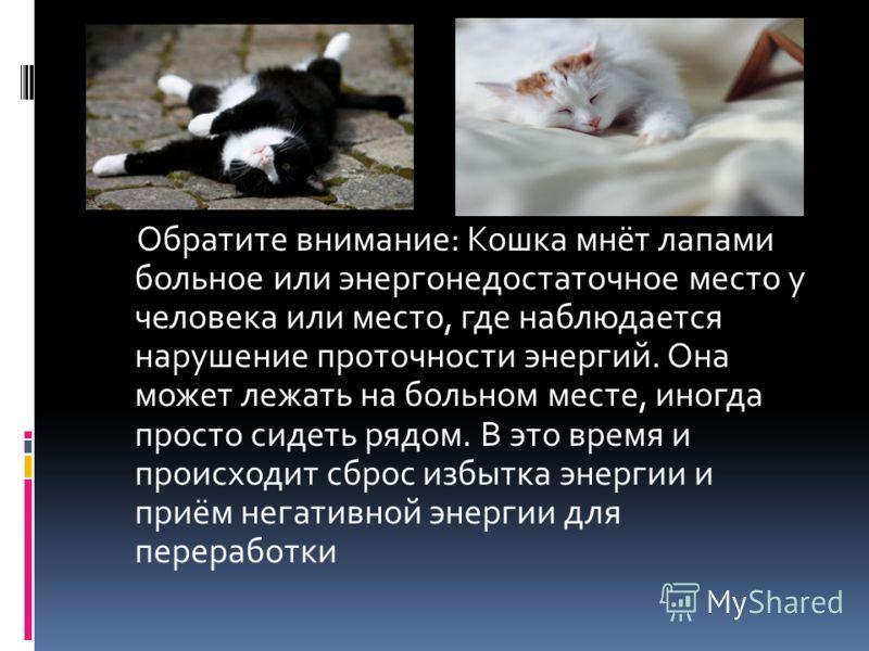 Обратите внимание: Кошка мнёт лапами больное или энергонедостаточное место у человека или место, где наблюдается нарушение проточности энергий. Она может лежать на больном месте, иногда просто сидеть рядом. В это время и происходит сброс избытка энер