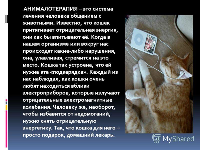 АНИМАЛОТЕРАПИЯ – это система лечения человека общением с животными. Известно, что кошек притягивает отрицательная энергия, они как бы впитывают её. Когда в нашем организме или вокруг нас происходят какие-либо нарушения, она, улавливая, стремится на э