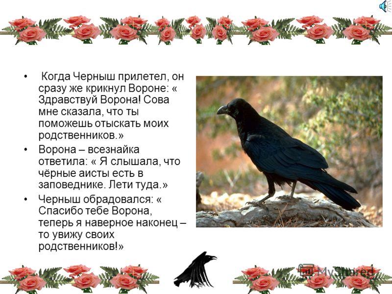 «Неужели я так и не увижу всю свою семью!» - с отчаянием сказал аист. « Я кажется знаю кто тебе поможет!» - с улыбкой сказала сова – « Лети к вороне – всезнайке, которая живёт на опушке леса.» « Спасибо тебе огромное!» - сказал аист и полетел на опуш