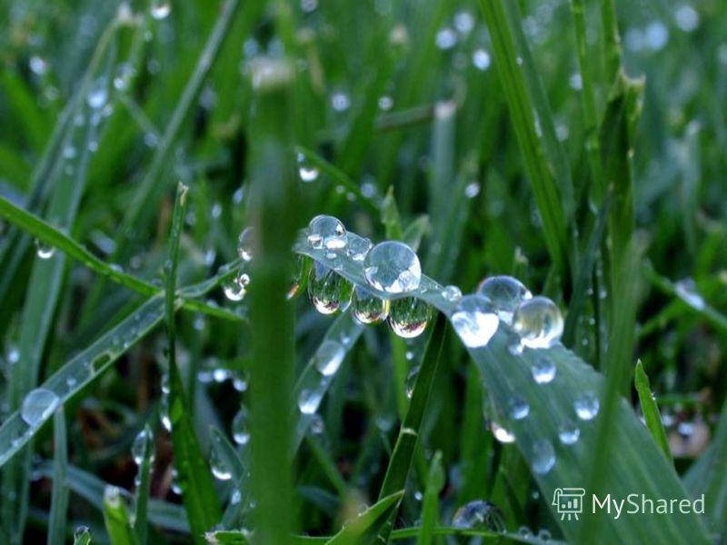 РОСА Утром бусы засверкали, Всю траву собой застлали, А пошли искать их днём, Ищем, ищем – не найдём.