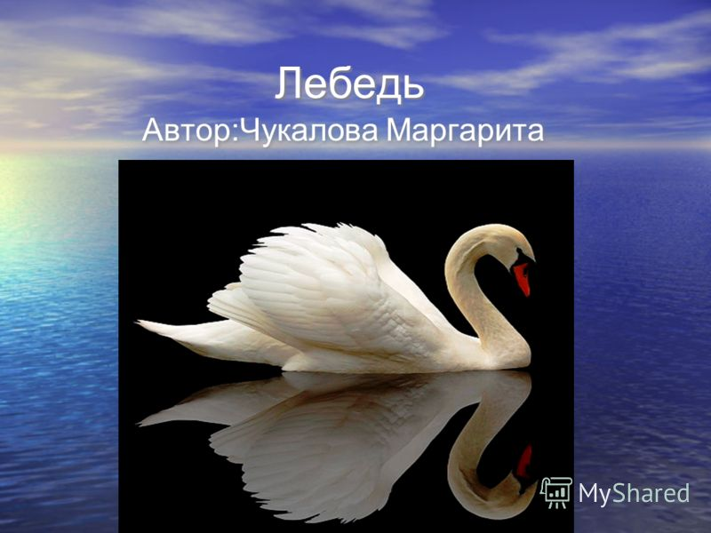 Лебедь Автор:Чукалова Маргарита