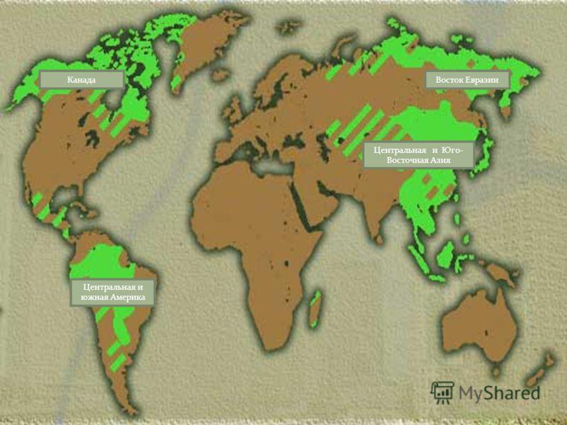 Восток Евразии Центральная и Юго- Восточная Азия Канада Центральная и южная Америка