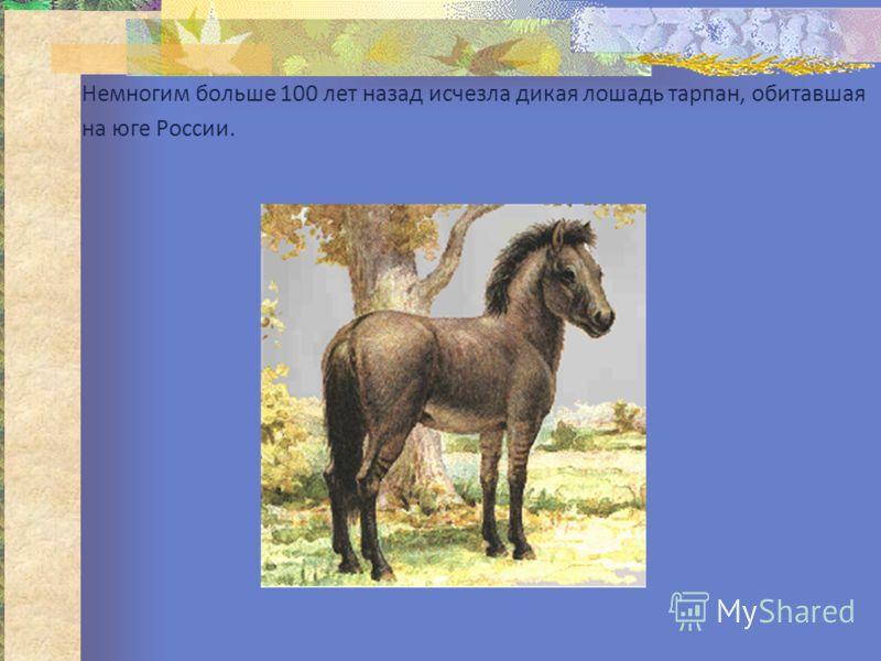 Немногим больше 100 лет назад исчезла дикая лошадь тарпан, обитавшая на юге России.