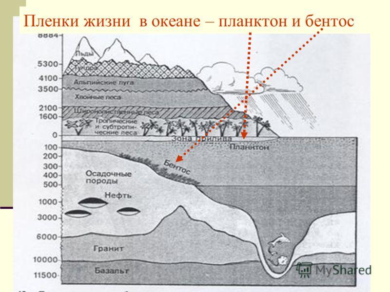 Пленки жизни в океане – планктон и бентос
