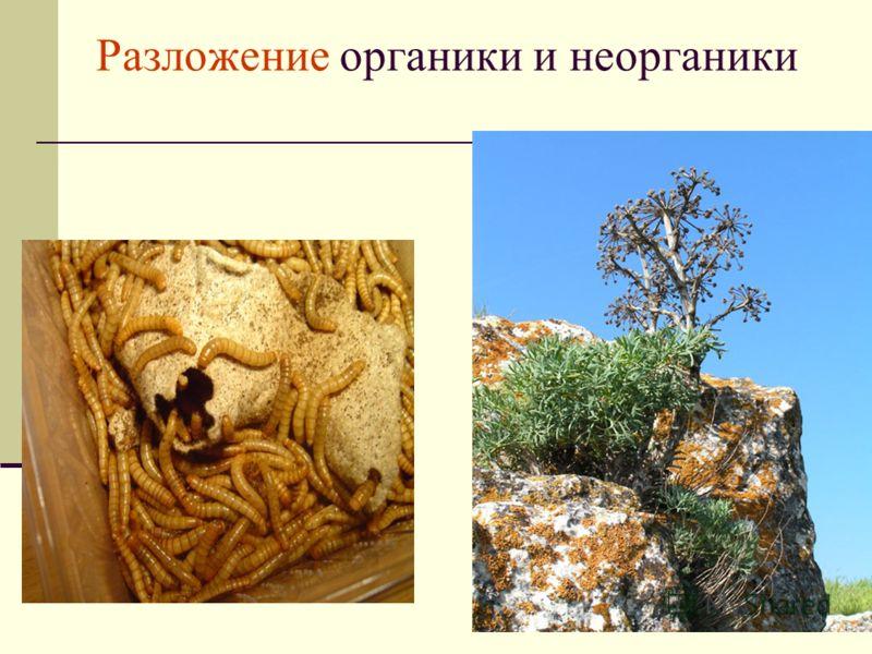 Разложение органики и неорганики