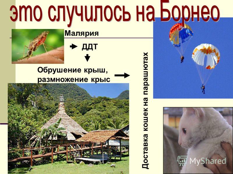 ДДТ Обрушение крыш, размножение крыс Малярия Доставка кошек на парашютах