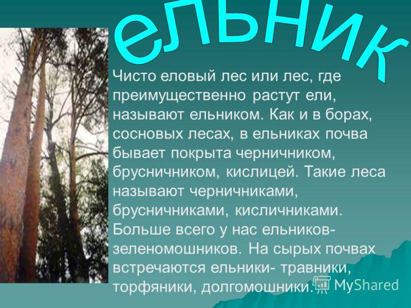 Чисто еловый лес или лес, где преимущественно растут ели, называют ельником. Как и в борах, сосновых лесах, в ельниках почва бывает покрыта черничником, брусничником, кислицей. Такие леса называют черничниками, брусничниками, кисличниками. Больше все