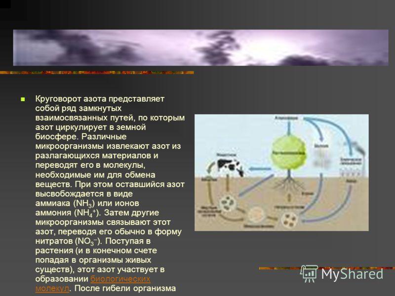 Круговорот азота представляет собой ряд замкнутых взаимосвязанных путей, по которым азот циркулирует в земной биосфере. Различные микроорганизмы извлекают азот из разлагающихся материалов и переводят его в молекулы, необходимые им для обмена веществ.