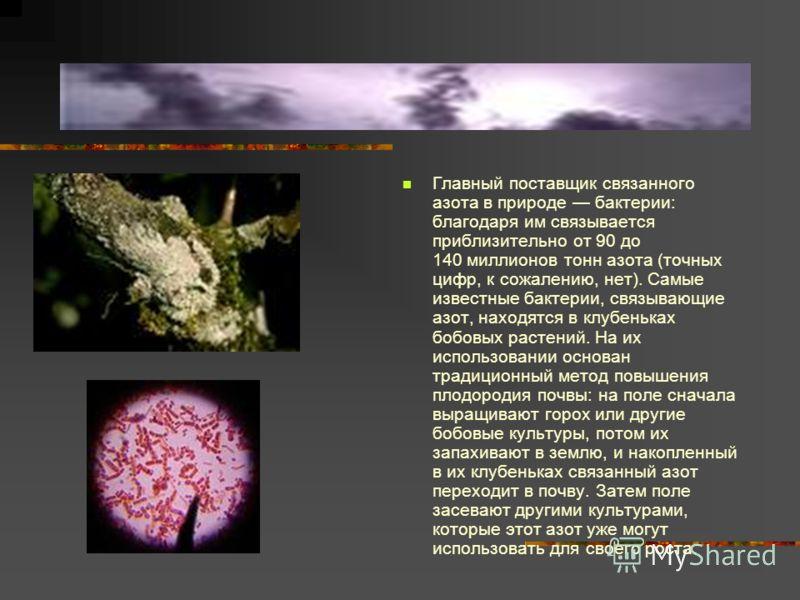 Главный поставщик связанного азота в природе бактерии: благодаря им связывается приблизительно от 90 до 140 миллионов тонн азота (точных цифр, к сожалению, нет). Самые известные бактерии, связывающие азот, находятся в клубеньках бобовых растений. На