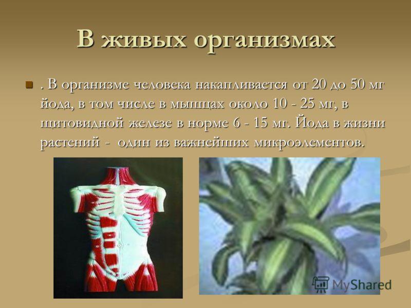 В живых организмах. В организме человека накапливается от 20 до 50 мг йода, в том числе в мышцах около 10 - 25 мг, в щитовидной железе в норме 6 - 15 мг. Йода в жизни растений - один из важнейших микроэлементов.. В организме человека накапливается от