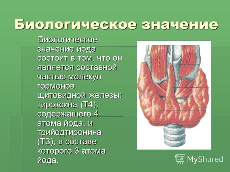 Биологическое значение Биологическое значение йода состоит в том, что он является составной частью молекул гормонов щитовидной железы: тироксина (Т4), содержащего 4 атома йода, и трийодтиронина (ТЗ), в составе которого 3 атома йода. Биологическое зна
