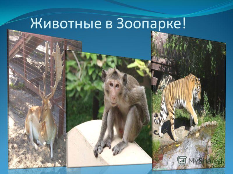 Животные в Зоопарке!