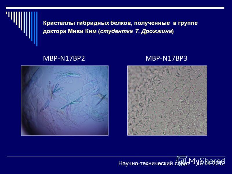 MBP-N17BP2MBP-N17BP3 Кристаллы гибридных белков, полученные в группе доктора Миви Ким (студентка Т. Дрожжина) Научно-технический совет - 16.04.2012