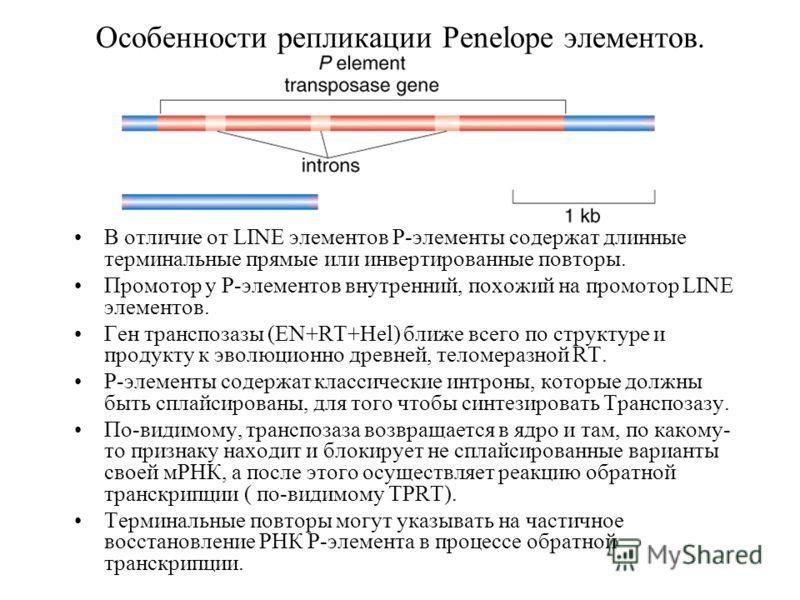 Особенности репликации Penelope элементов. В отличие от LINE элементов P-элементы содержат длинные терминальные прямые или инвертированные повторы. Промотор у P-элементов внутренний, похожий на промотор LINE элементов. Ген транспозазы (EN+RT+Hel) бли
