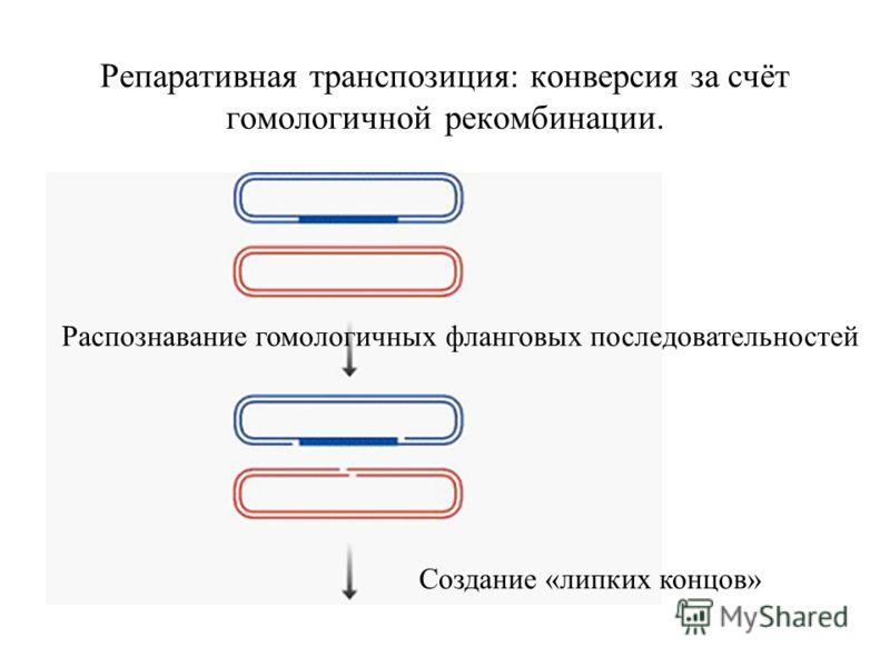 Репаративная транспозиция: конверсия за счёт гомологичной рекомбинации. Распознавание гомологичных фланговых последовательностей Создание «липких концов»