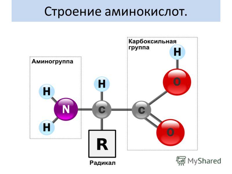 Строение аминокислот.