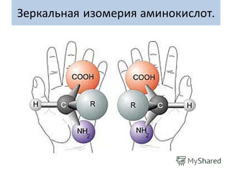 Зеркальная изомерия аминокислот.