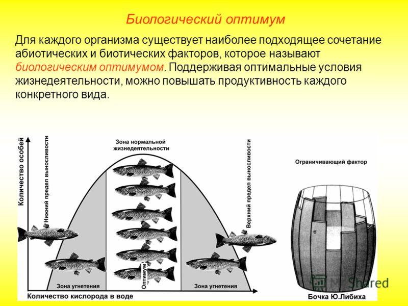 Биологический оптимум Для каждого организма существует наиболее подходящее сочетание абиотических и биотических факторов, которое называют биологическим оптимумом. Поддерживая оптимальные условия жизнедеятельности, можно повышать продуктивность каждо
