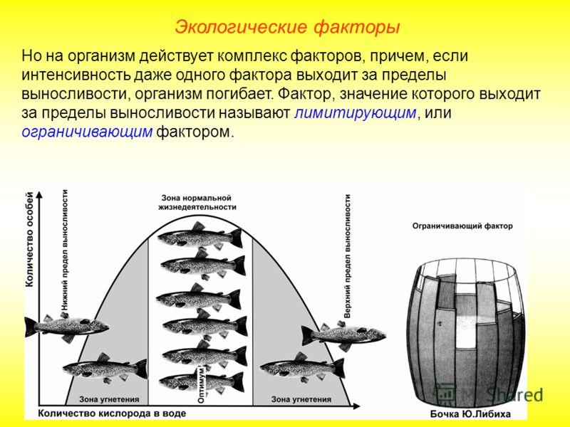 Экологические факторы Но на организм действует комплекс факторов, причем, если интенсивность даже одного фактора выходит за пределы выносливости, организм погибает. Фактор, значение которого выходит за пределы выносливости называют лимитирующим, или