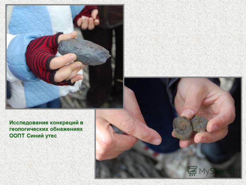 Исследование конкреций в геологических обнажениях ООПТ Синий утес