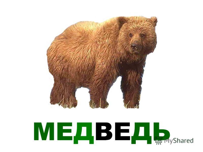 На тему лесные животные россии