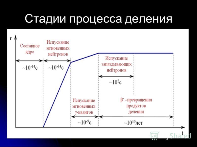Стадии процесса деления