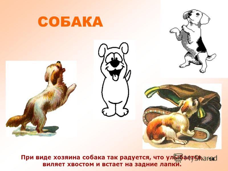 13 СОБАКА По мимо того что собака охраняет дом, человек берет собаку на охоту. На собаках можно ездить в упряжке. Еще есть собаки спасатели, ведь у собак отличный нюх!