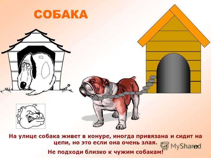 16 СОБАКА Собаки едят мясо, рыбу, птицу или сухой корм. Любимое лакомство у собак – косточка.