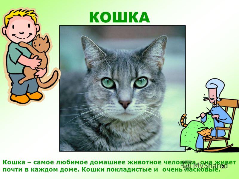 ДОМАШНИЕ ЛЮБИМЦЫ ДОМАШНИЕ ЛЮБИМЦЫ Кошки и собаки