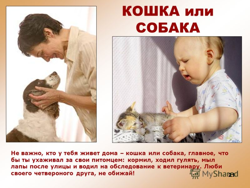 20 КОШКА и СОБАКА Кошки и собаки не дружат друг с другом. Даже есть такая поговорка – «ругаются как кошка с собакой». Редко бывает, когда они живут дружно в одном доме.
