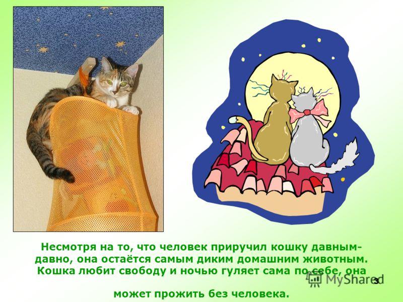 2 КОШКА Кошка – самое любимое домашнее животное человека, она живет почти в каждом доме. Кошки покладистые и очень ласковые.