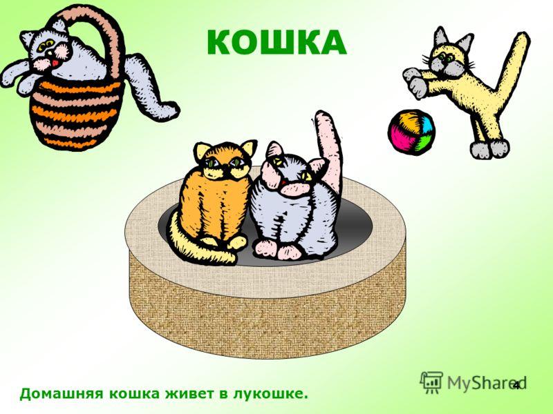 3 Несмотря на то, что человек приручил кошку давным- давно, она остаётся самым диким домашним животным. Кошка любит свободу и ночью гуляет сама по себе, она может прожить без человека.