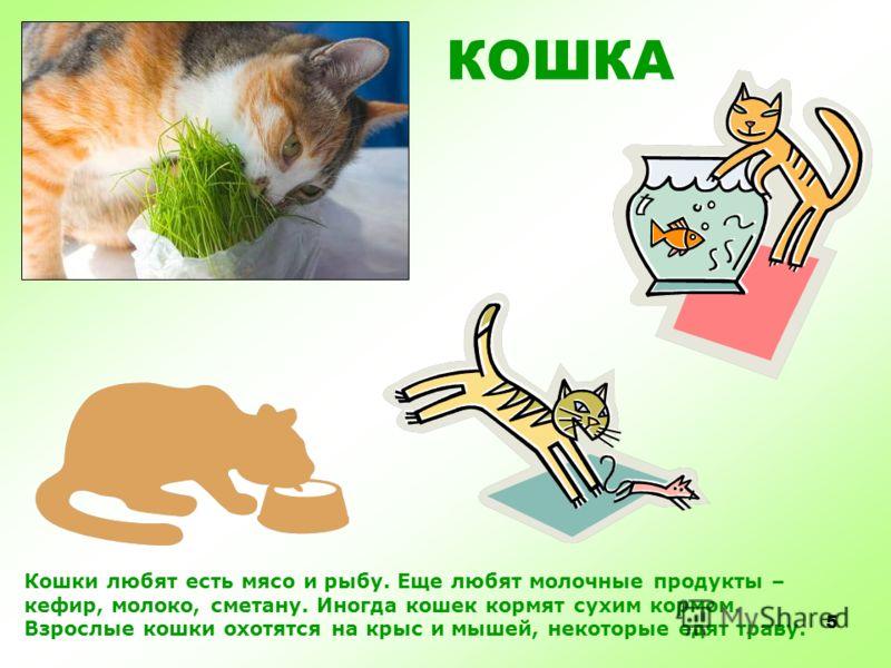 4 КОШКА Домашняя кошка живет в лукошке.