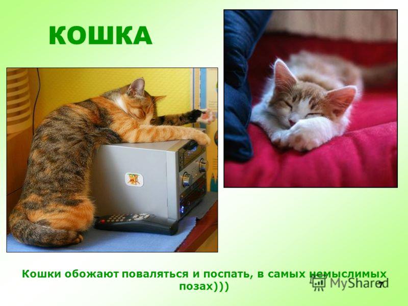 6 Кошки большие чистюли, все время умываются, чистятся, прихорашиваются. Не мусорят и ходят в туалет. КОШКА