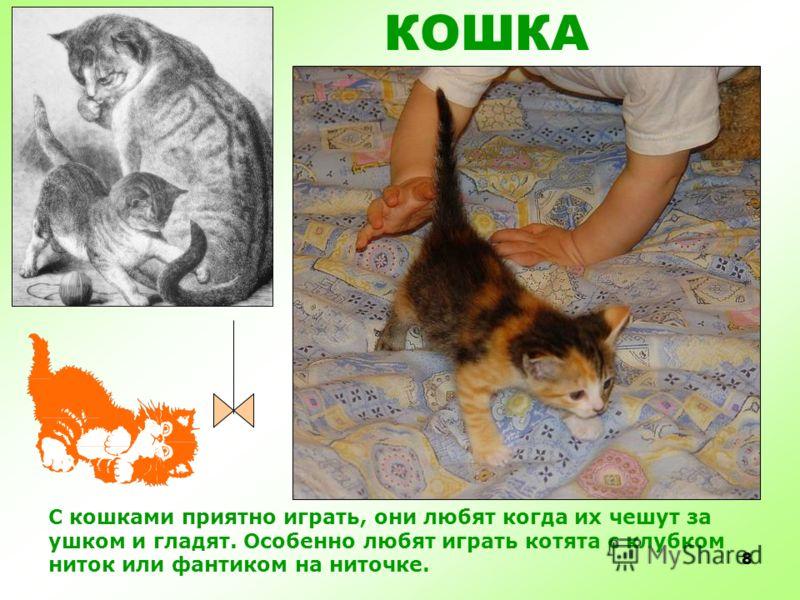 7 Кошки обожают поваляться и поспать, в самых немыслимых позах))) КОШКА