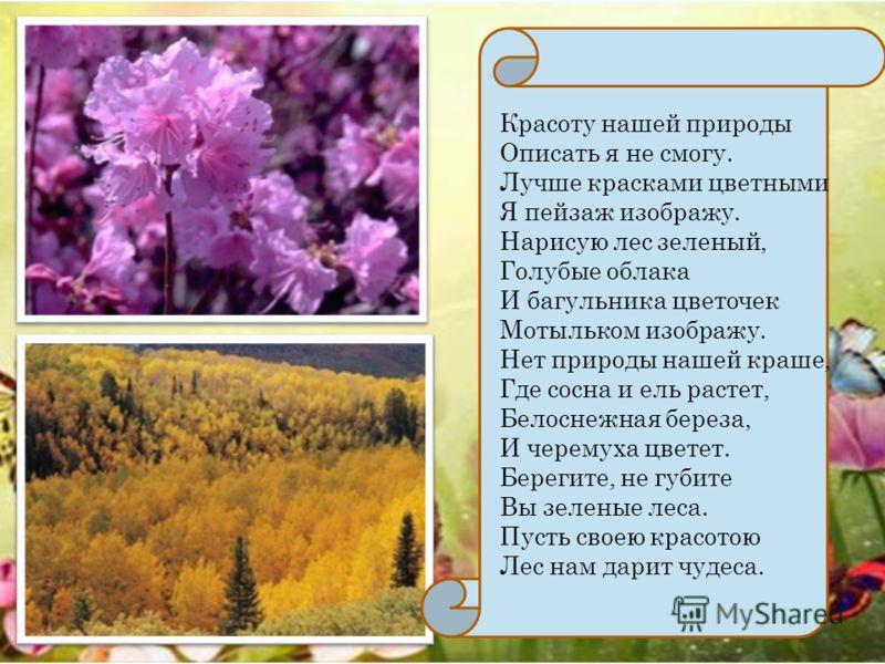 Красоту нашей природы Описать я не смогу. Лучше красками цветными Я пейзаж изображу. Нарисую лес зеленый, Голубые облака И багульника цветочек Мотыльком изображу. Нет природы нашей краше, Где сосна и ель растет, Белоснежная береза, И черемуха цветет.