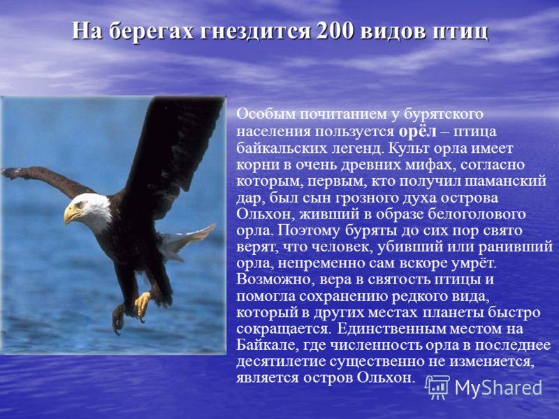На берегах гнездится 200 видов птиц Особым почитанием у бурятского населения пользуется орёл – птица байкальских легенд. Культ орла имеет корни в очень древних мифах, согласно которым, первым, кто получил шаманский дар, был сын грозного духа острова