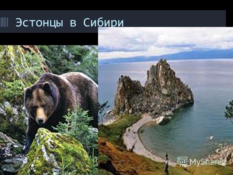 Эстонцы в Сибири