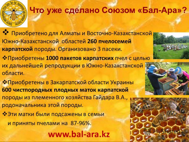 Приобретено для Алматы и Восточно-Казахстанской и Южно-Казахстанской областей 260 пчелосемей карпатской породы. Организовано 3 пасеки. Приобретены 1000 пакетов карпатских пчел с целью их дальнейшей репродукции в Южно-Казахстанской области. Приобретен
